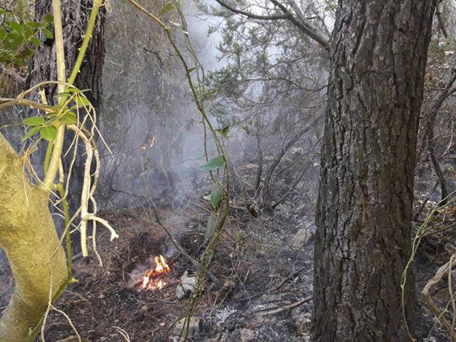 112: hitan prijevoz zrakom za Zagreb, požar na Mljetu